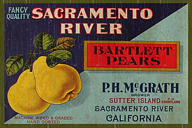 Pears-Bartlett-Wall Plaque